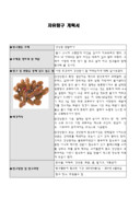 강낭콩 관찰 탐구 보고서