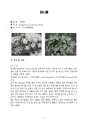 참나물과 비트 잎 뿌리