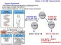 점막면역과민반응과 면역관용