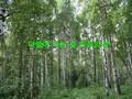 더불어사는 숲(치유의 숲)
