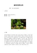 셀러리(양미나리) 재배기술