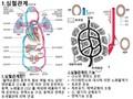 심혈관계과 혈액의기능
