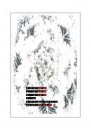 양배추꽃 레포트표지